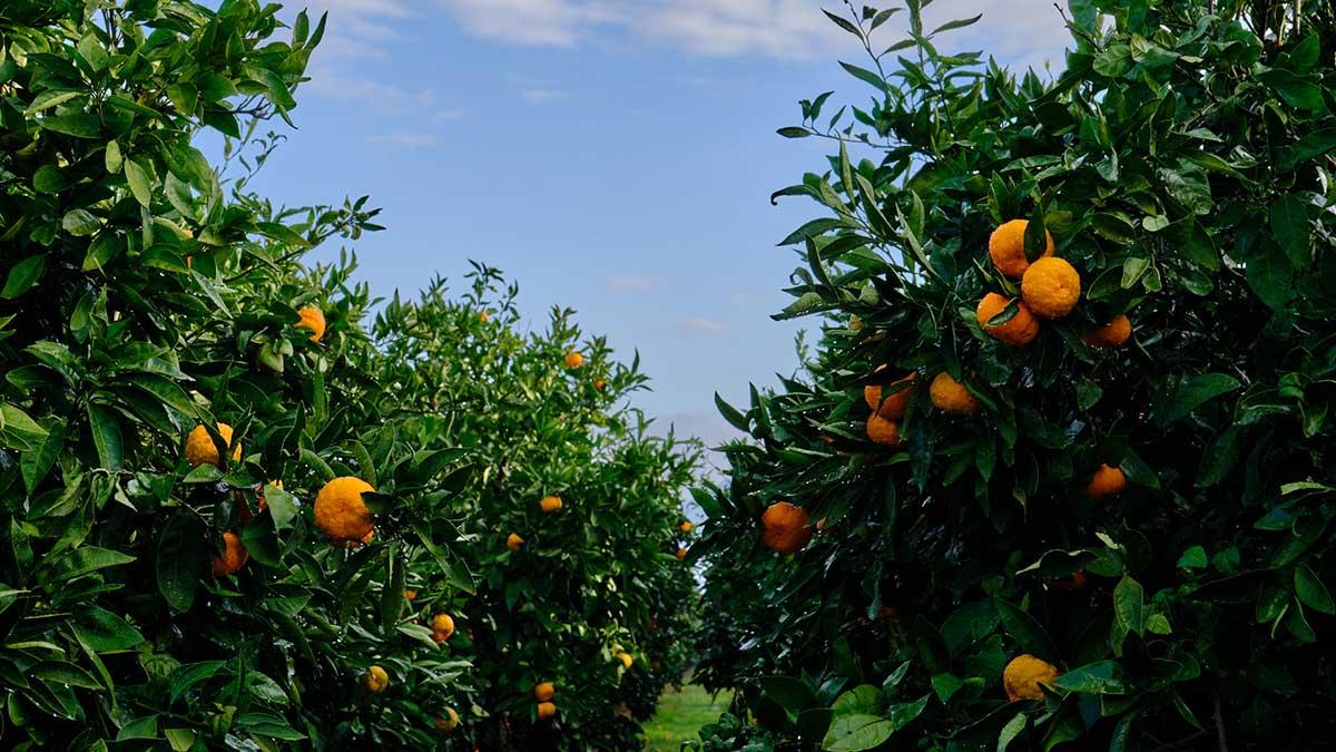 Prírodné Dalmatínske produkty